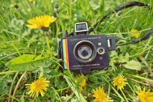 Polaroid camera on dandelions